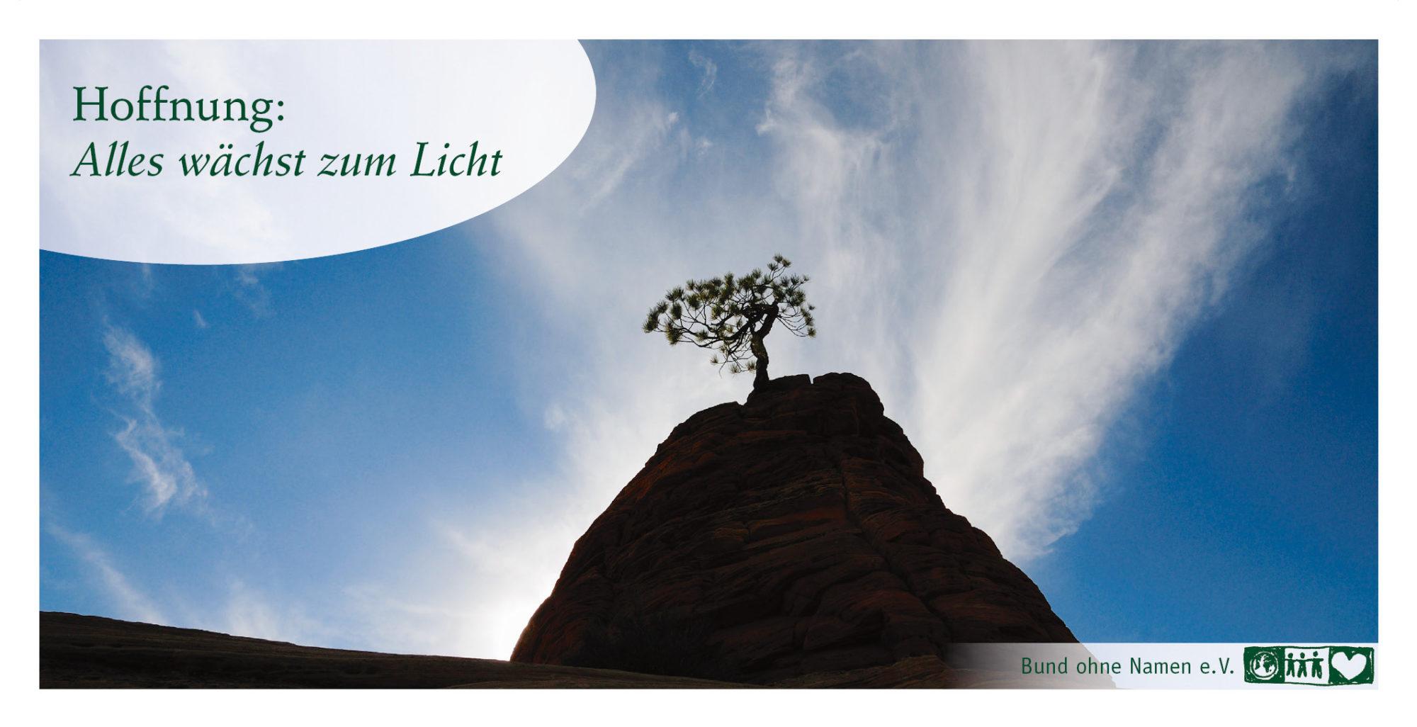 Hoffnung: Alles wächst zum Licht