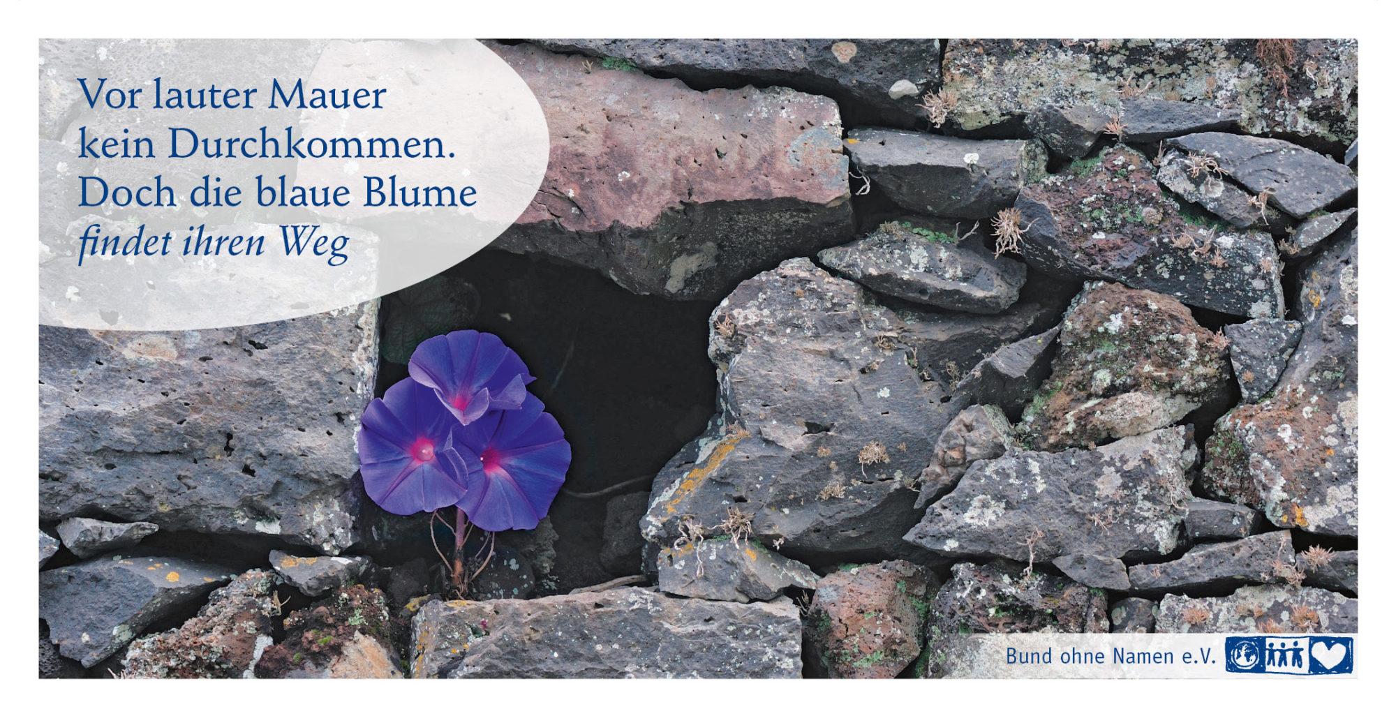 Vor lauter Mauer kein Durchkommen. Doch die blaue Blume findet ihren Weg