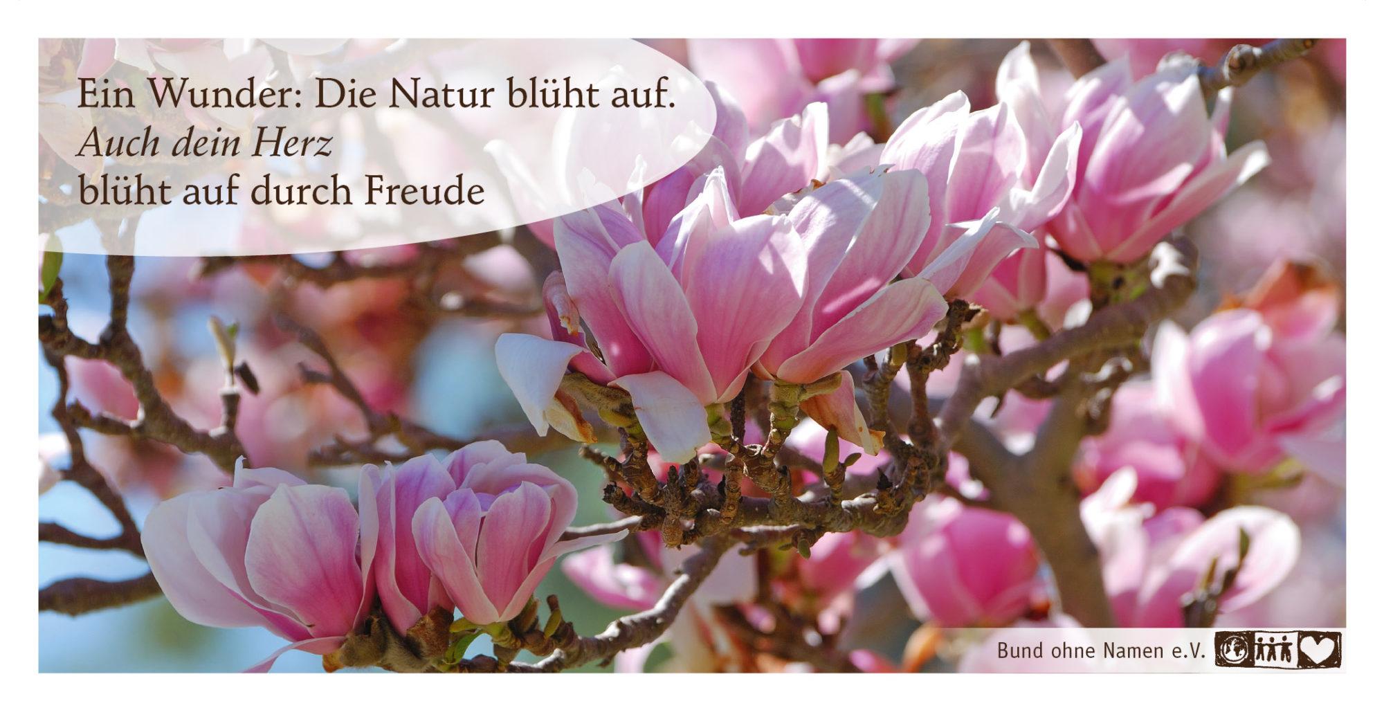 Ein Wunder: Die Natur blüht auf. Auch dein Herz blüht durch Freude