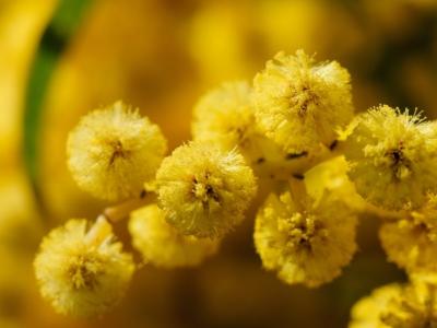 Blumen des Glücks tragen viele Namen